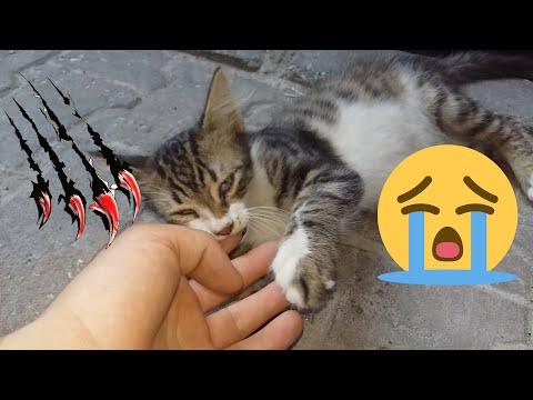 Little Kitten Attacked me   Kitten Videos   Cute Kittens l Cute Cat