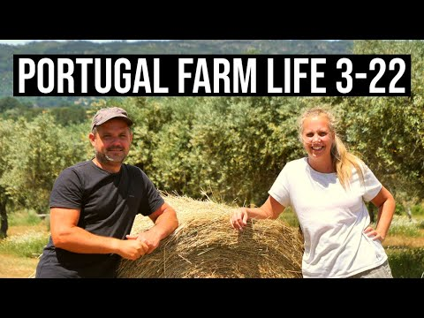 ORGANIC VEGETABLES and Tractor Harvest | PORTUGAL FARM LIFE S3-E22 ⚡