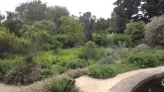 Nénuphars dans un immense jardin d'agrément... thumbnail