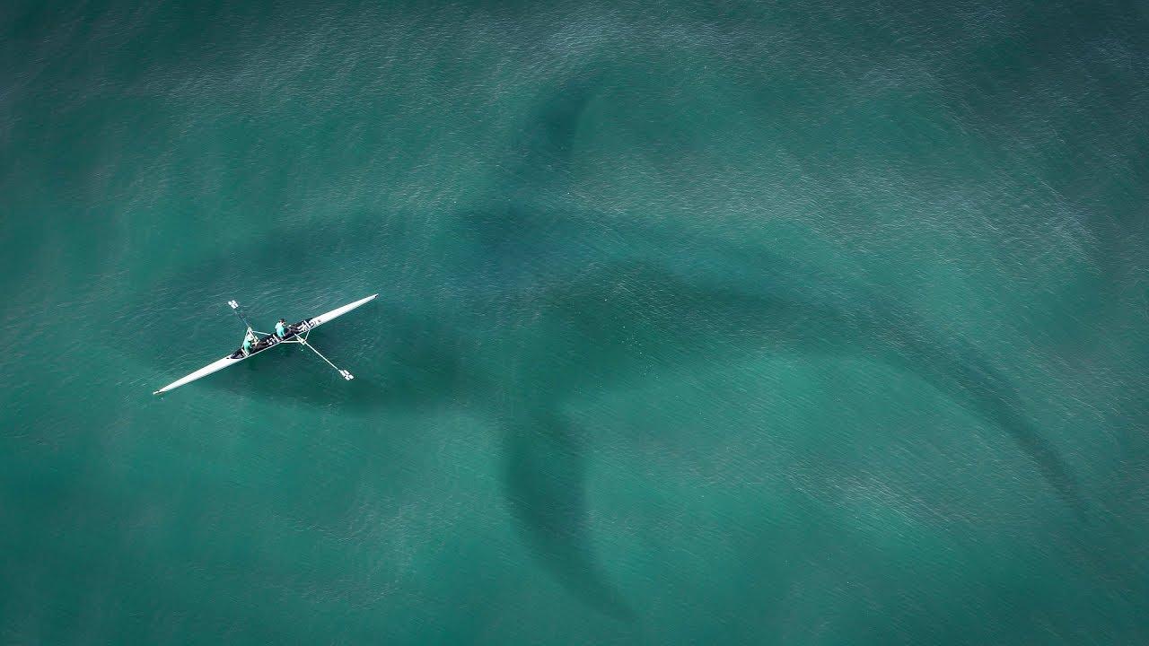 الحوت الأزرق | الحيوان الأضخم على وجه الكوكب !!