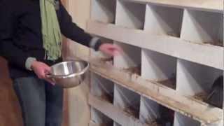 Chicken Care Video