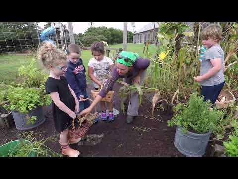 "Harvesting ""The Three Sisters Garden"" at Nantucket Lighthouse School"