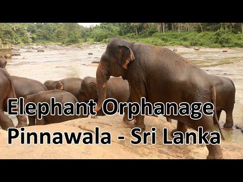pinnawala-elephant-orphanage-sri-lanka