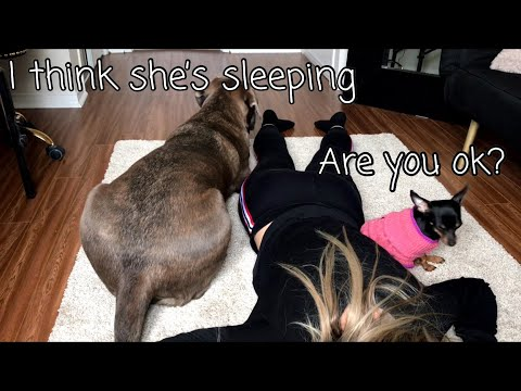 DOGS REACT TO OWNER FAINTING.. HILARIOUS REACTION.. DOG PRANK