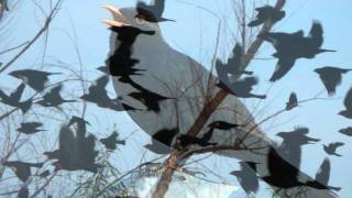 Blackbirds chirping - the relaxing sound of chirping birds