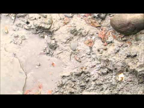塗彈魚|七股潟湖|龍海號