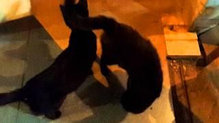 Новое Кошка срет макетом,жесть