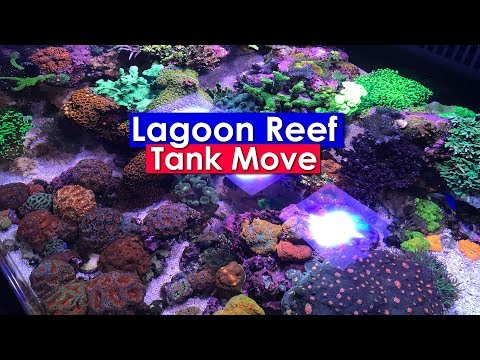 saltwater-aquarium---lagoon-reef-update:-moving-a-saltwater-aquarium