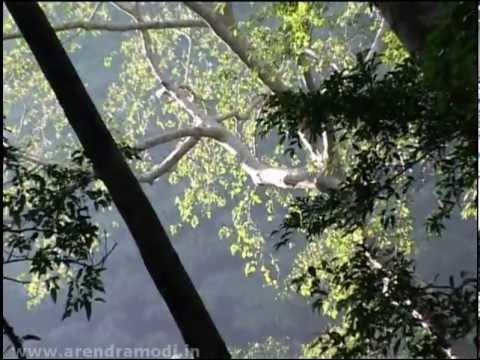 Gujarat's Sanskritik Vans (Cultural Forests): A film