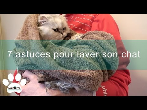 7 Astuces Pour Laver Son Chat | Assur O'Poil