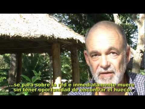 No bite, no Malaria  -  Life saving anti-malaria mosquiteros for indigenous people in Venezuela