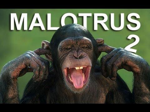 LES MALOTRUS 2 - PAROLE D'ANIMAUX
