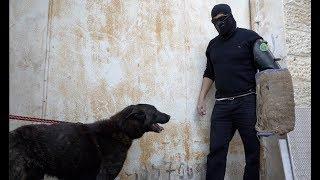مغامرات-و-تحدي-مع-كلب-الذيب-الذي-يكرهني-و-هاجم-سترتي-مع-جمال-العمواسي