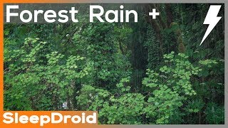 ►10 hours of Forest Rain and Thunderstorm Sounds for Sleeping. Relaxing Rain Sounds: Lluvia Dormir