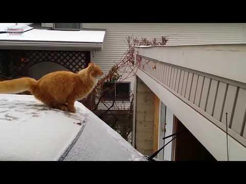 Lustige Katze Springen Ausfallen 2018