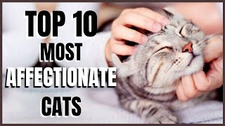 Cats 101 : Top 10 Most Affectionate Cats