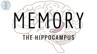 Memory -- the hippocampus