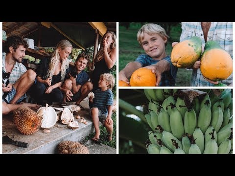 A DAY IN OUR HAWAII LIFE | Big Island Abundance