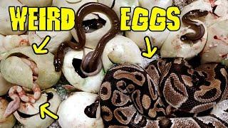 Weird Eggs Full of What?