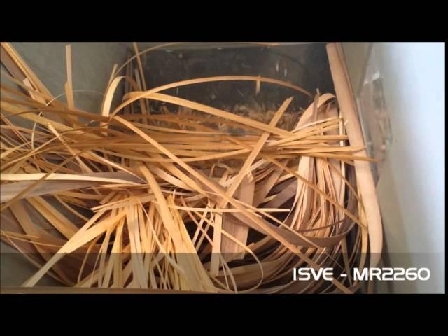 ISVE single shaft shredder MR2260 for wood veneer