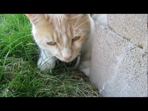 Cat Cam Vlog #2 – Ninja Cat Fail
