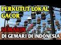 Perkutut Lokal Semakin Di Gemari Di Indonesia Dari Latber Latpres Lomba Nasional  Mp3 - Mp4 Download