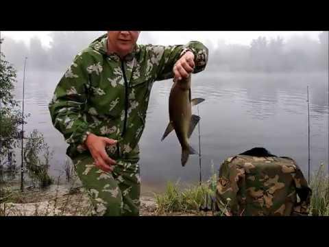 фидерная рыбалка на припяти июнь 2019