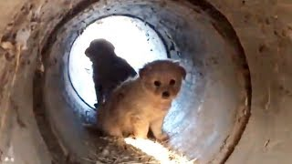 Rescuing Puppies