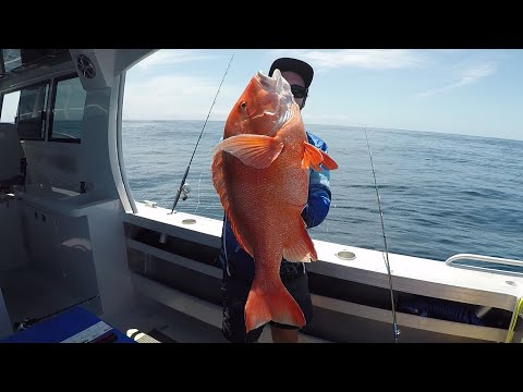 Big Red Emperor, Snapper, And More! -no Misses Fishing-