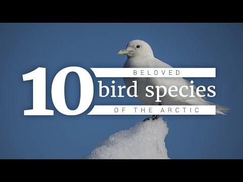 Birds Of The Arctic