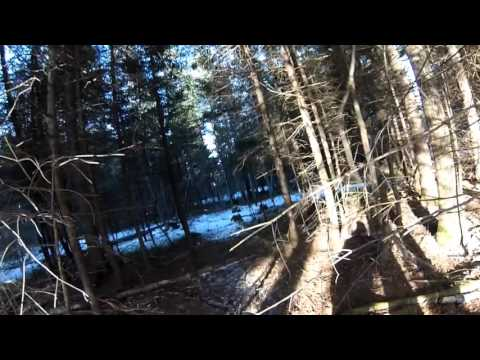 Grouse Hunting Western Maine