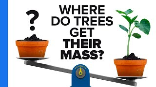 Where Do Trees Get Their Mass?