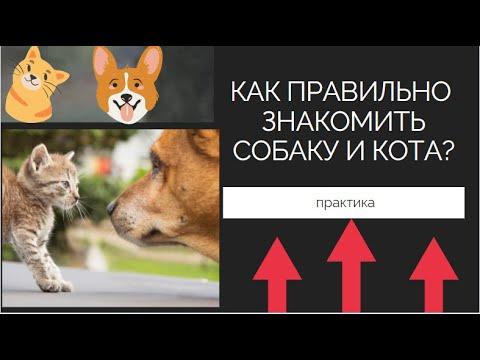 Как познакомить кота и собаку? Собака и кошка в одном доме - как подружить их?