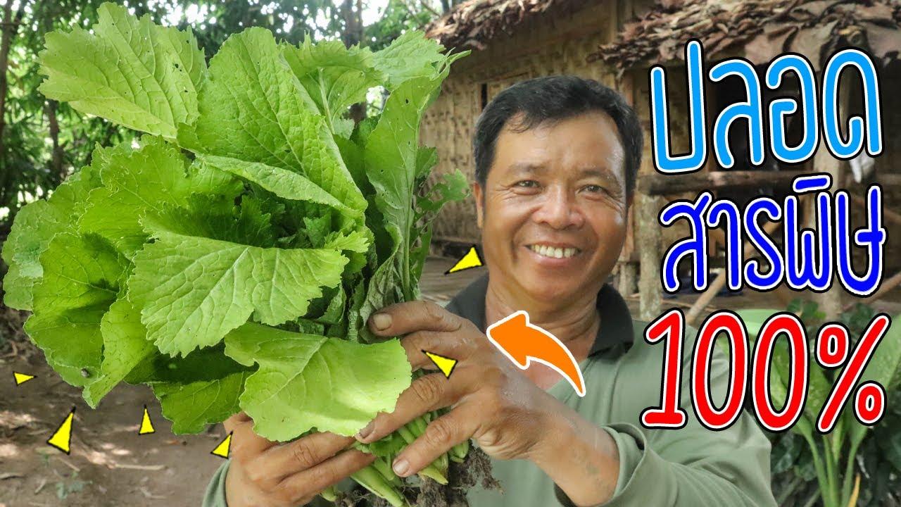 ทำอาหารในป่า แกงผักกาด สูตรรัฐฉาน ปลูกเองกินเอง ผักปลอดสารพิษ 100% l SAN CE