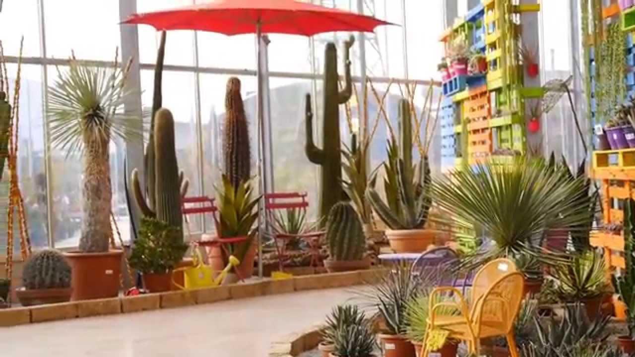 Mostra delle piante grasse bardin garden center youtube for Piante grasse rare