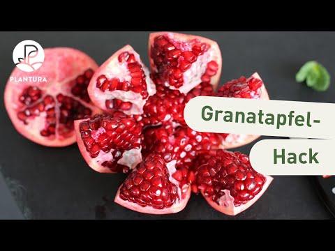 Beliebt Bevorzugt Granatapfel öffnen & entkernen: So geht's richtig - Plantura @LW_52