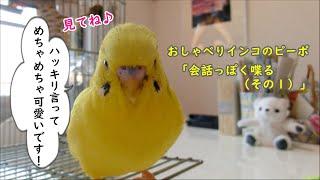 放鳥時の飼い主とのコミュニケーションの様子を撮影してみました。ちょ...