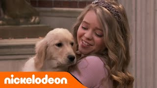 Baixar School of Rock | Un cane per Summer | Nickelodeon Italia