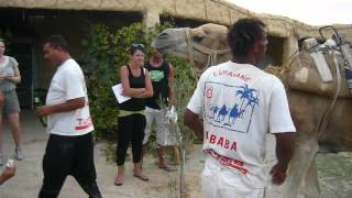 2012 tunezja wielbłąd pije sprite