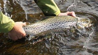 Pesca en Rusia. Río Varzina-Península de Kola.