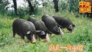 欢迎订阅走遍中国频道https://goo.gl/IMynXW 本期节目主要内容: 安徽省...