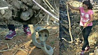    जबरदस्त नाग रेस्क्यू    Cobra: venomous rescue by Nirzara Chitti   