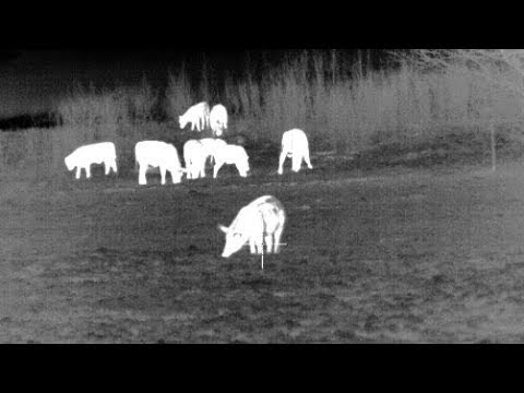 77 Hogs Down - Hog Hunting with Thermal Night Vision - Pulsar XP50