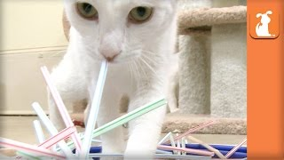Baby Kittens Play With Straws With Tiny Paws - Kitten Love