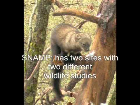 SNAMP Picture Series
