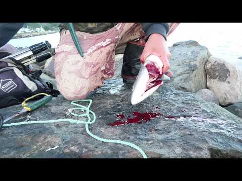 How To Bleed A Fish For Better Eating