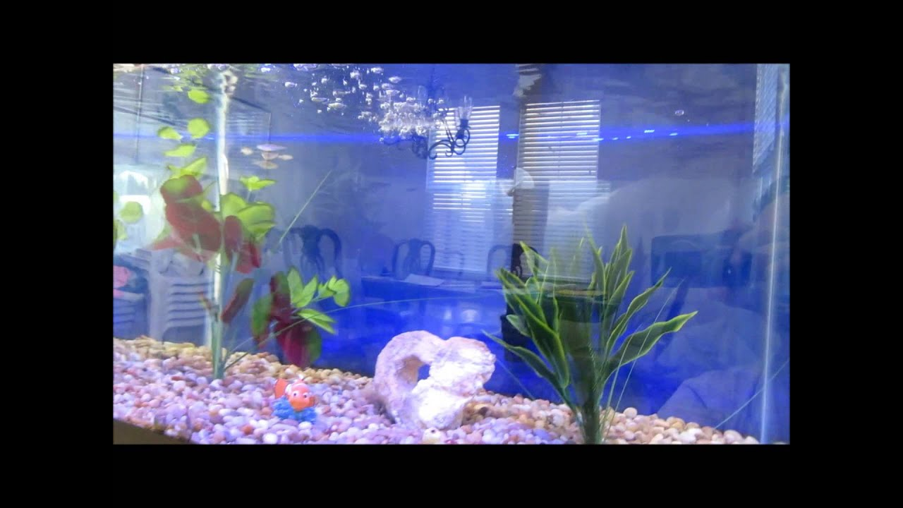 Marineland 34 Gallon Fish Tank with Stand and Marineland ...