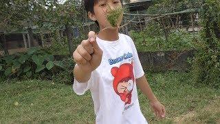 Tuổi thơ không bất hạnh . Chơi cỏ gà. Cỏ Việt Nam không phải cỏ Mỹ