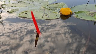 Рыбалка на ПОПЛАВОК ТАЩУ НА ДВЕ удочки сразу клев карася и плотвы летом