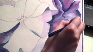 Speed Drawing: Petunias